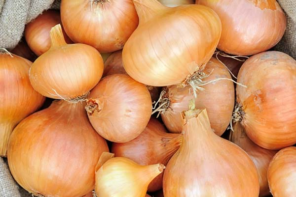onion dealers