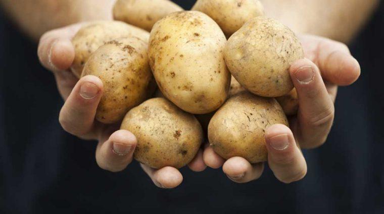 iowa potato businesses